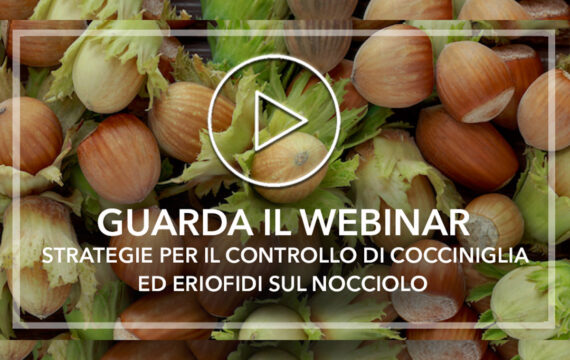 Guarda_Webinar_Nocciolo_1